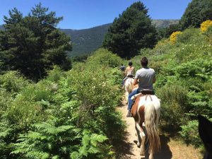 Rutas a caballo en Madrid desde Cercedilla