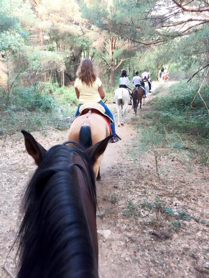 caballos y naturaleza desde cercedilla