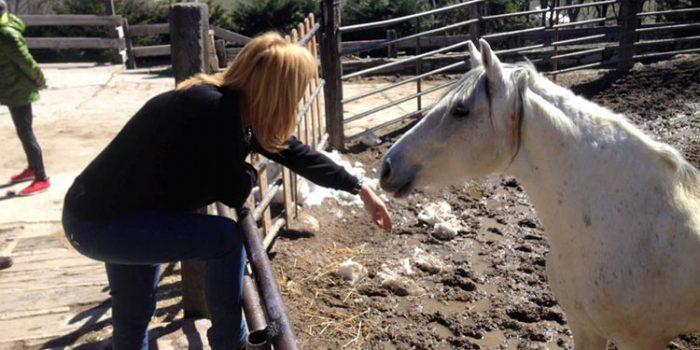 Experiencia al cuidado de los caballos