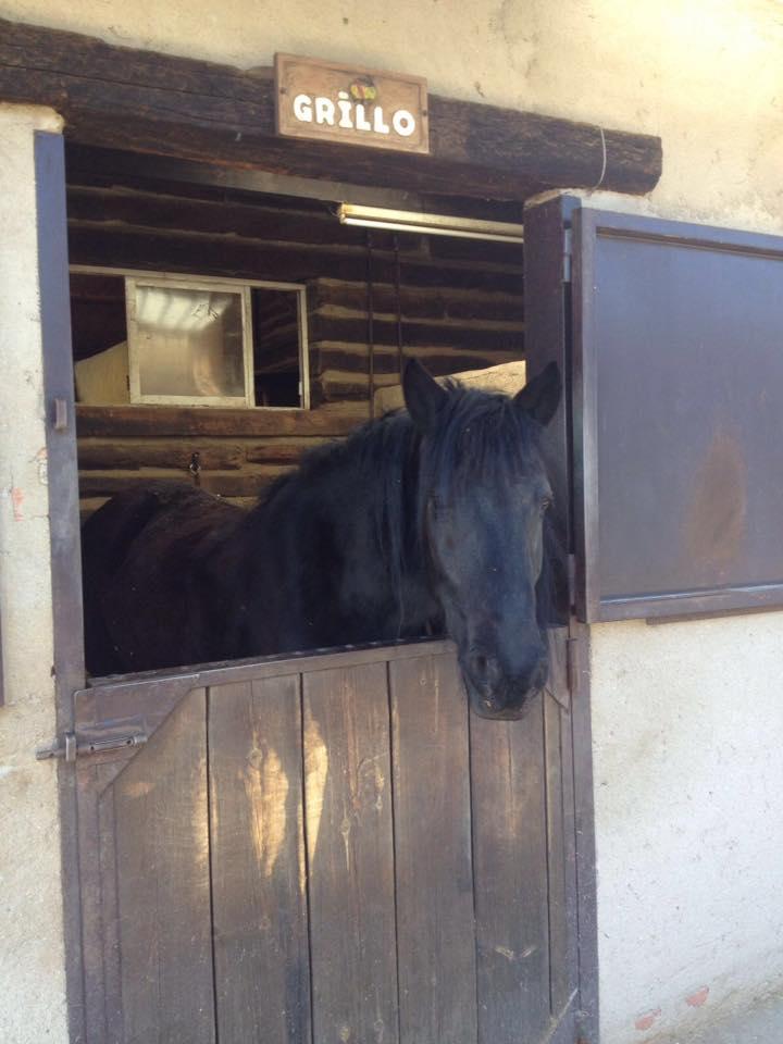 caballo madrid
