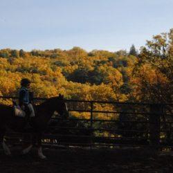 caballos y naturaleza
