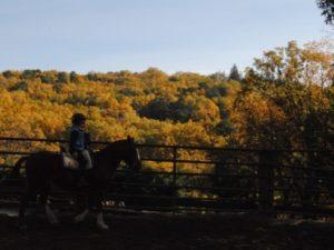 Rutas a caballo en Madrid: Interactúa con la naturaleza y los caballos
