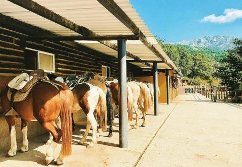 paseos a caballo madrid 2019