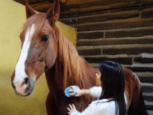 Pupilaje en Cercedilla: cuidamos de tu caballo como si fuera nuestro