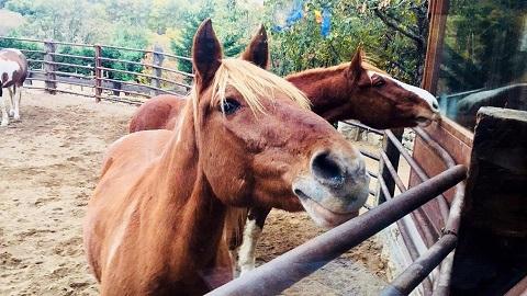 haz una ruta a caballo en madrid