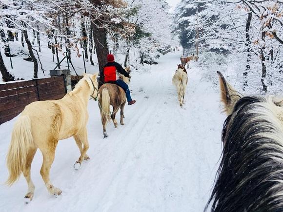 montar a caballo como experiencia