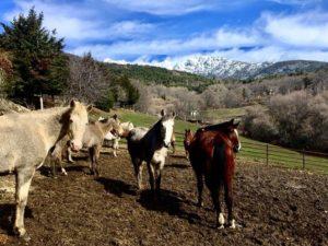 ¿Quieres hacer algo diferente? Vente a montar a caballo en Madrid