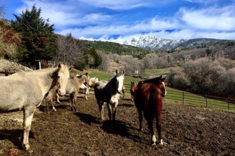 vente a montar a caballo en Madrid