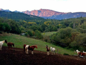 ¿Buscas rutas a caballo por la Sierra de Madrid?