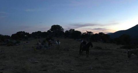 monta a caballo en Halloween